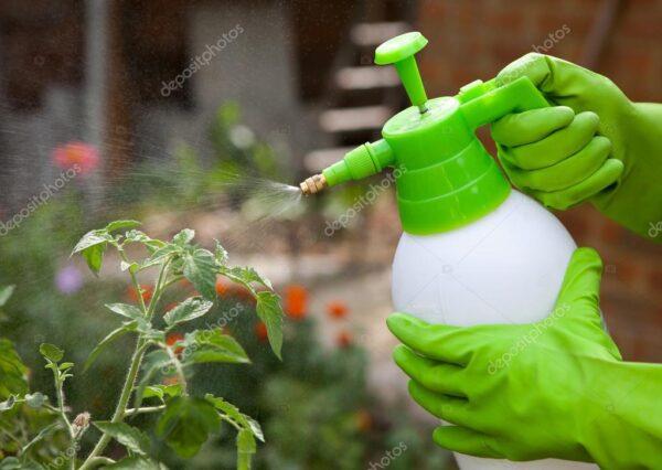 depositphotos_93759264-stock-photo-spraying-tomatos-plants